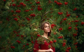 Picture look, girl, branches, face, Park, tree, green, sweetheart, model, portrait, dress, fruit, red, brown hair, …