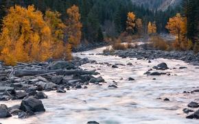 Picture autumn, trees, mountains, river, stones