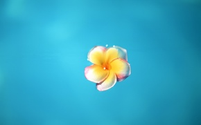 Wallpaper flower, blue, Minimalism
