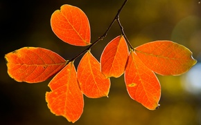 Wallpaper nature pictures, tree, macro leaves, nature, autumn, tree, leaves