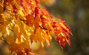 Wallpaper leaves, color, branch, lush, graduation, background, autumn