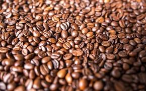 Wallpaper grain, a lot, coffee