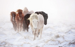 Picture winter, snow, horses