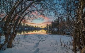 Picture winter, the sky, snow, trees, landscape, branches, traces, nature