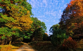 Picture road, autumn, forest, the sky, trees