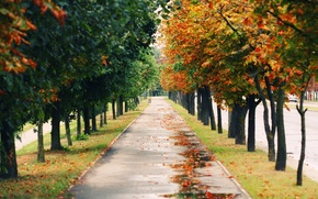 Wallpaper Park, mood, landscapes, nature, road, trees, path, paths, mood, alley, alley, autumn