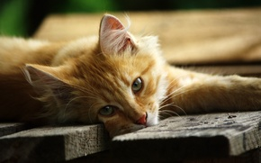 Picture lies, look, cat, face, red, Board, the platform, green, eyes