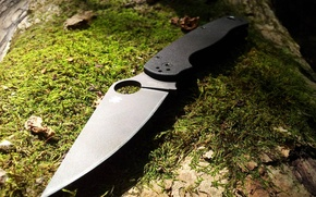Picture forest, tree, moss, Knife, Spyderco. Paramilitary 2