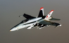 Picture flies, hornet, F-18