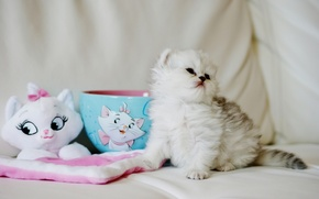 Picture toy, fluffy, baby, Cup, kitty
