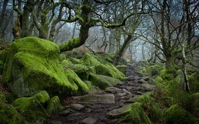 Picture autumn, trees, fog, stones, moss, track