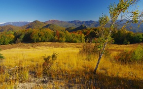 Picture field, autumn, forest, grass, the sun, trees, mountains, hills, birch