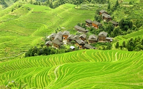 Picture greens, field, China, houses, the view from the top, plantation