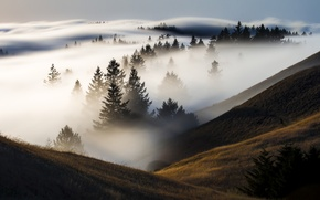 Picture forest, fog, hills, valley, CA, USA