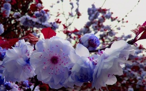 Picture branch, Spring, flowering branch