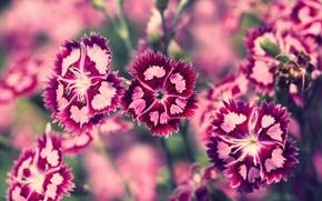 Wallpaper pink, flowers, nature, summer