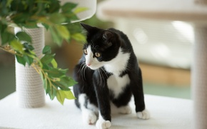 Picture cat, cat, leaves, plant, black and white