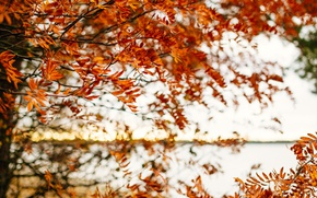 Picture autumn, leaves, tree, branches, fall, foliage