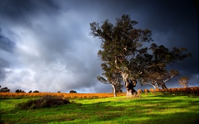 Wallpaper the sky, grass, trees, clouds, nature, Nature, sky, view, scenery, picture, green grass, old tree, ...