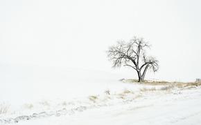 Picture winter, field, snow, tree