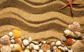 Picture beach, texture, sand, marine, starfish, seashells, sand seashells