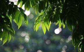 Wallpaper summer, bokeh, tree, leaves