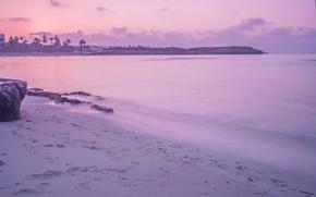 Wallpaper sea, water, surface, palm trees, dawn, shore, stone, morning