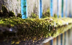 Picture green, tree, green, Board, the fence, moss, tree, moss