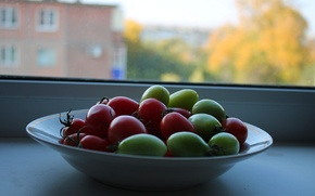 Picture Autumn, plate, green, sill, tomatoes, ripe