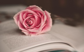 Picture flower, macro, pink, rose, book