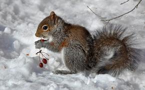 Wallpaper winter, berries, protein