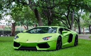 Picture Lamborghini, Green, LP700-4, Aventador