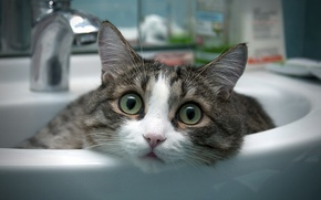 Picture cat, room, bathroom, sink