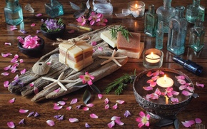 Picture candles, petals, soap, briar, bottle, starfish, still life, rosemary, sea urchin