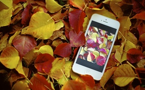 Picture autumn, photo, foliage, apple, iphone, photo, photographer, Jamie Frith