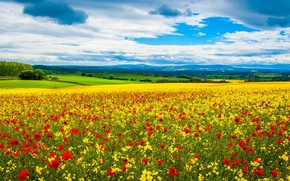 Picture HILLS, HORIZON, The SKY, FIELD, CLOUDS, YELLOW, FLOWERS, RED, MEADOW, DAL, NARCISSUS, MAC
