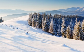 Picture winter, snow, trees, mountains, nature, background, Wallpaper, tree, wallpaper, widescreen, winter, background, snow, full screen, …