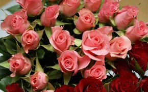 Picture flowers, roses, different