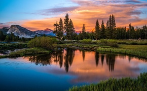 Picture forest, water, Sunset