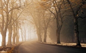 Picture road, autumn, asphalt, light, snow, trees, fog, the way, the fence, morning, roadside, haze, time ...