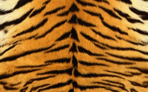 Picture strips, tiger, skin, fur, striped