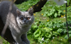 Picture tree, Cat, curiosity, cat on a tree, Scottish stride