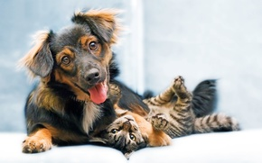 Picture Dog, puppy, cat, animal, sweet, funny, snout