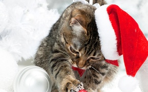 Picture winter, cat, snow, hat, Christmas, New year, Christmas, Cats, Kittens
