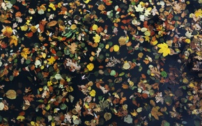 Picture Water, Autumn, Leaves