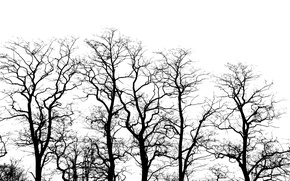 Picture mood, Trees, black and white, acacia silhouette