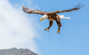 Picture the sky, clouds, flight, mountains, eagle, wings, bald eagle, wildlife
