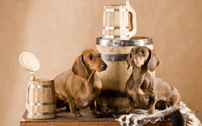 Picture dog, skin, pair, Dachshund, mugs, barrel