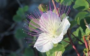 Picture white, flower, purple, macro