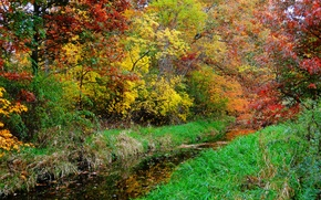 Picture autumn, forest, grass, trees, river, stream